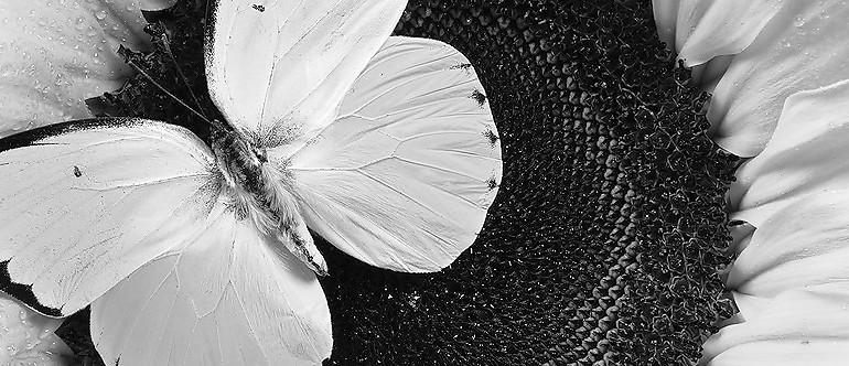 1 – vlinder